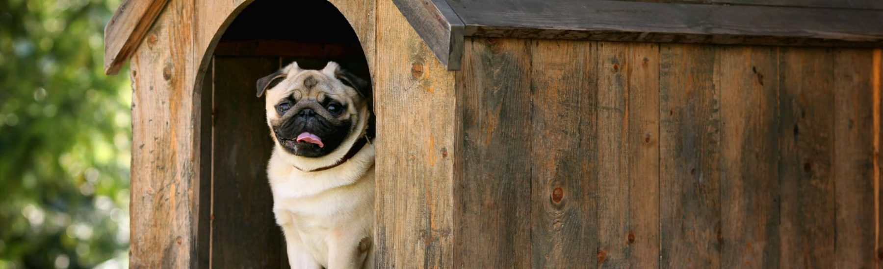 French Bulldog in a Dog House