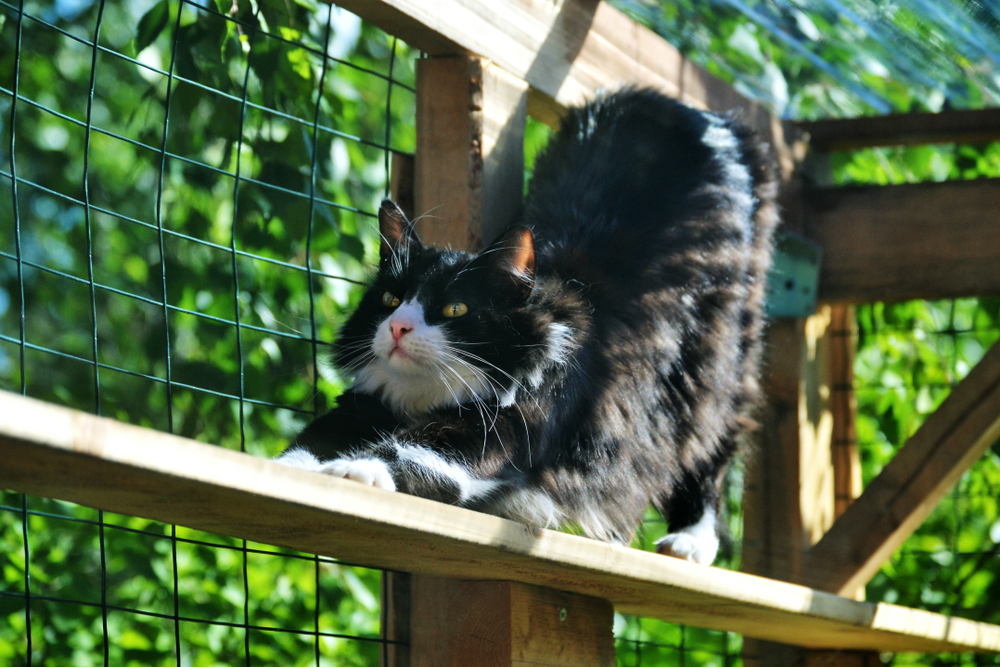 Cat stretching in an enclosure