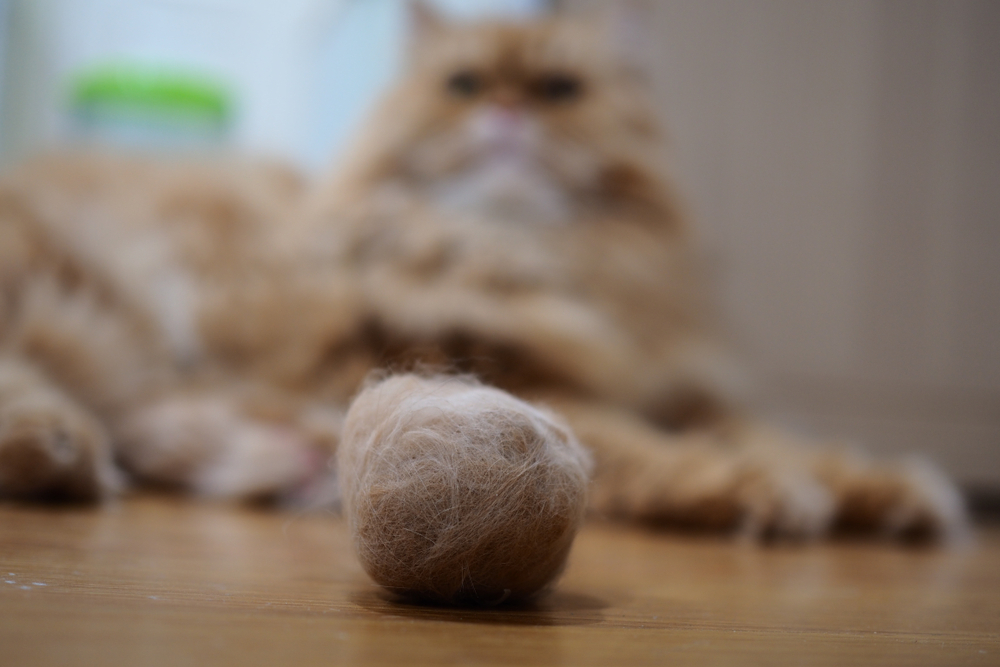 Close up of cat hairball