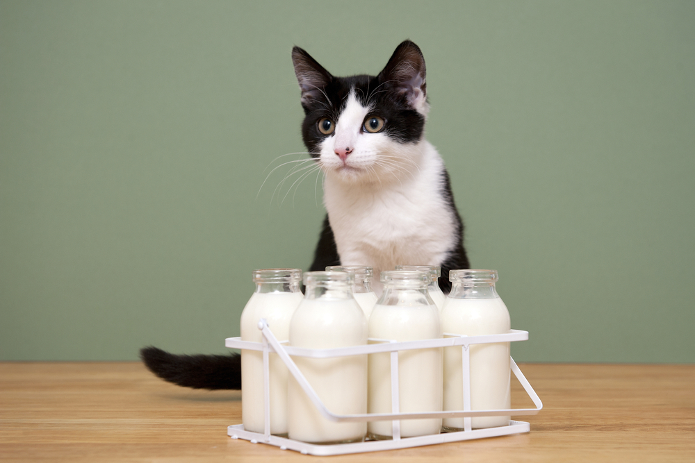 Cat with Bottles of Milk