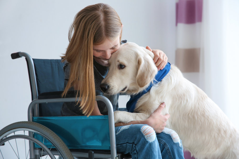Service dog with girl in wheelchair